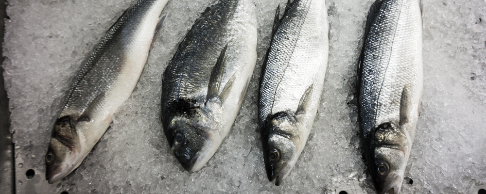 Fresh fish in cold storage with ice